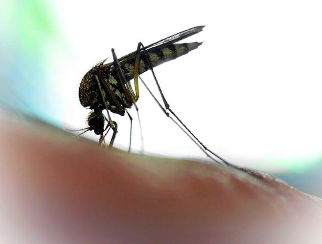 zanzare covid-19