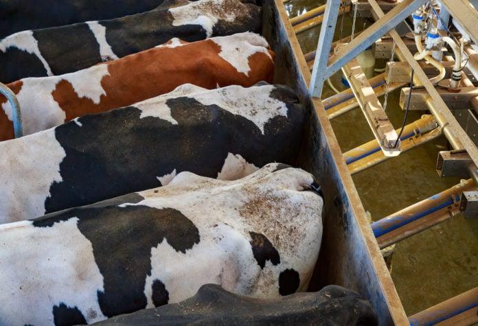 Gli animalisti alla Rai: non fatevi influenzare dall'industria della carne